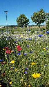 prairie fleurie 1
